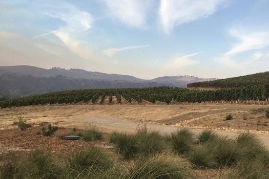 The Best Wineries Sta. Rita Hills Santa Barbara