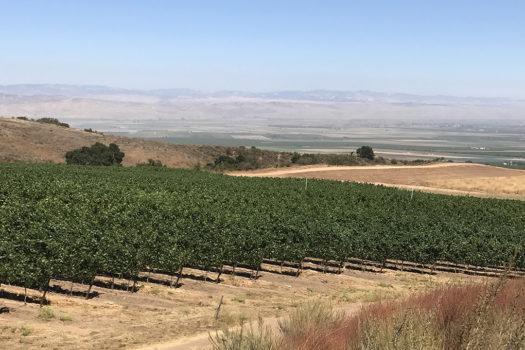 Winetasting At Pisoni Vineyards with Gary Pisoni