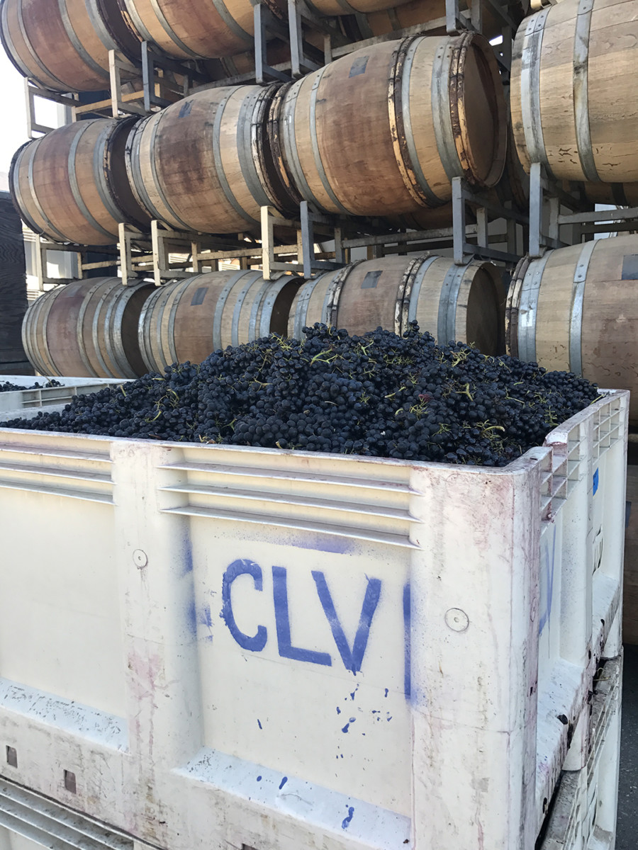 Qupe Winery Harvest