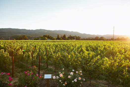 The Best Napa Dog-Friendly Wineries With Fabulous Wines