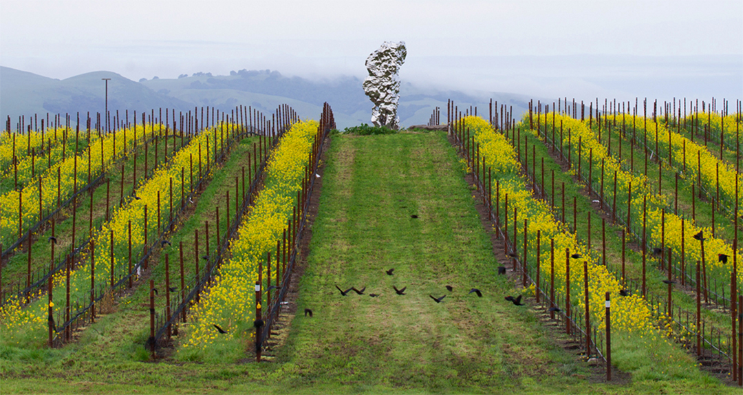 Carneros Wineries
