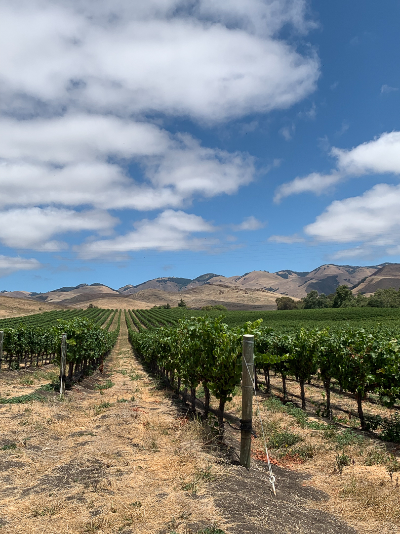 Tolosa Winery